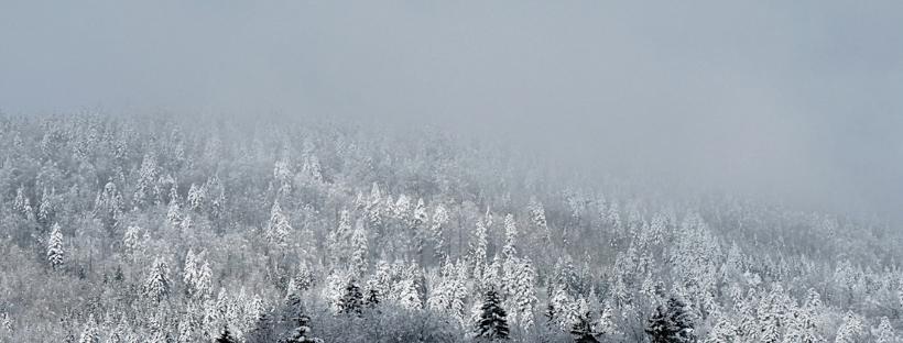 snowy trees banner EHL in winter